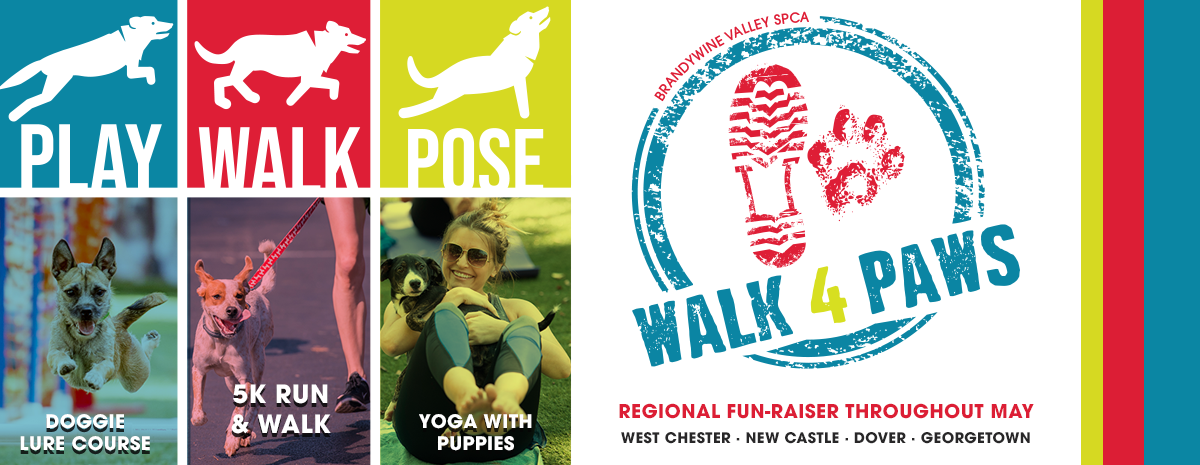 2021 Walk for Paws